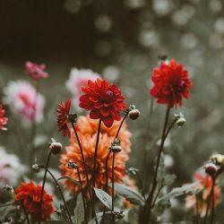 Erdem Spring 2019 – Review