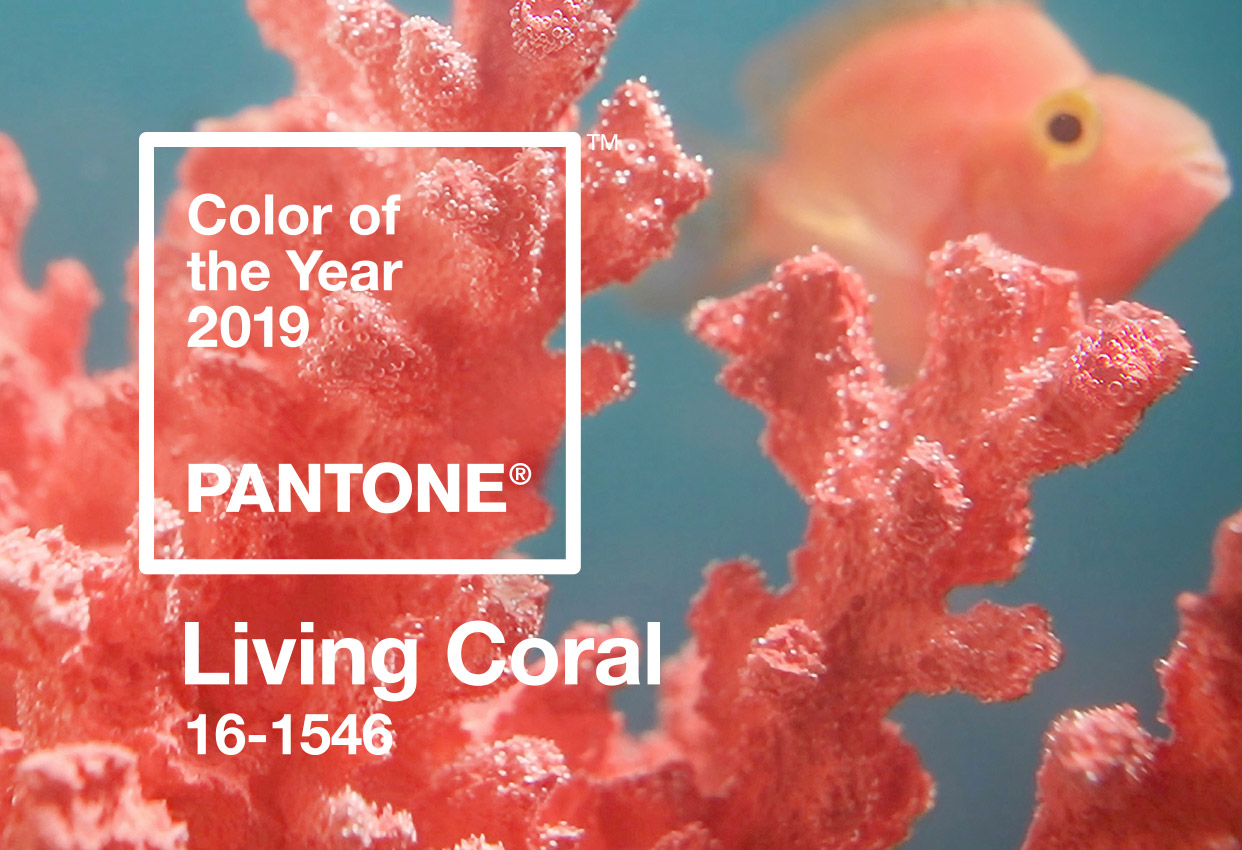 Pantone's Color of the year 2019 coral 2019