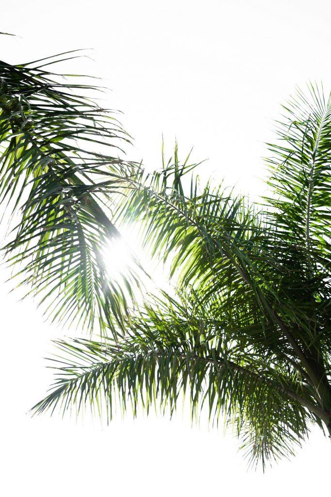 Sky Green Trees Sun