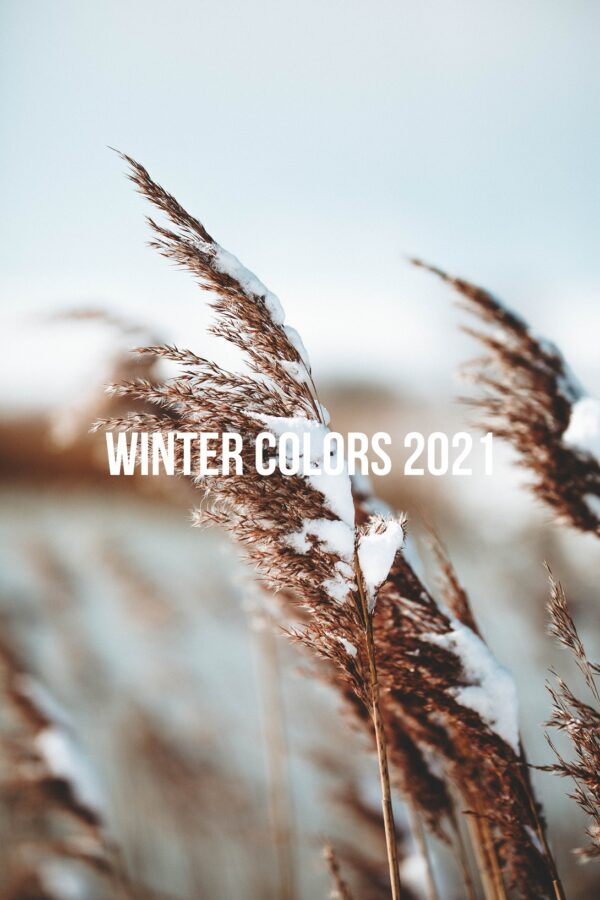 3 Winter Colors 2021